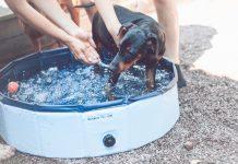 Vår pinschervalp Cora badar